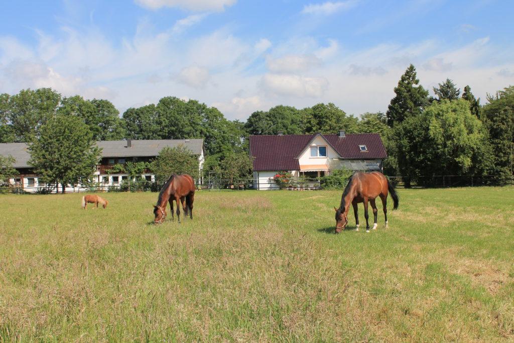Ansicht über grüne Pferdeweiden hinweg auf Wohnhaus und Pferdeställe von Gestüt Lindenkreuz, Leiter: Dr. Günter Gliem